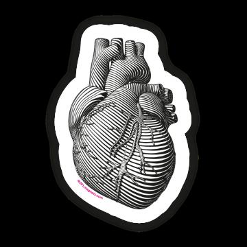 Realistické srdce